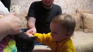 1 год 1 месяц. Гладит кошку
