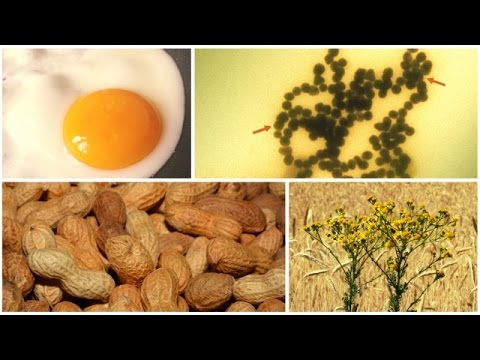 Food Allergies Could Soon Be Turned Off By Tiny Bits Of Plastic - Newsy