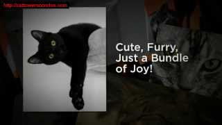 Best Cat Towers Cat Trees And Cat Condos Funny Video