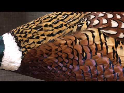 Amazing Texture Of Animals | ANIMALS Video For Kids