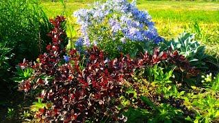 Прогулка по саду. Махровый ландыш и неизвестное растение. Май 2018