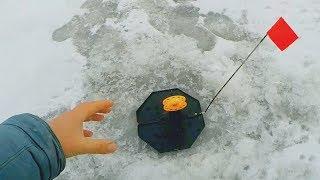 Что это за звук? Повернулся - ЗАГОРЕЛАСЬ! Рыбалка на жерлицы 2020! Ловля щуки зимой!