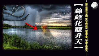 湖南特大暴雨驚現身長10米錦鯉,數千村民目睹它化龍升天,隨後出現驚人壹幕,村中百歲老人竟說大禍將至?