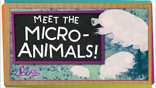 Meet The Microanimals!