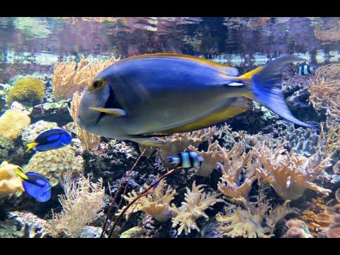 Visiting Animals in Aquatopia, Aquarium in Antwerp, Belgium 2015