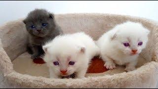 Прощаемся с КОШЕЧКОЙ Орлан! Очень Маленькие КОТЯТА! Кошка родила КОТЯТ! Видео для детей про котят