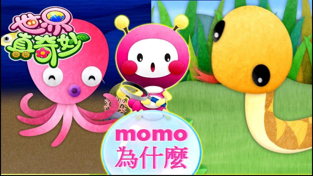 世界真奇妙|【momo為什麼?】為何章魚頭那麼大?|為何蛇沒有腳為何還會爬? - YouTube