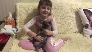 Знакомство с нашей кошкой Муркой - канадский сфинкс