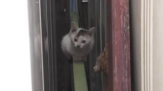 ぶちさば子猫ともふしば子猫、物置の裏を探検しています。周囲を気にす...
