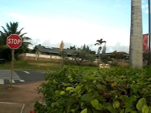 Hawaii 2008 1