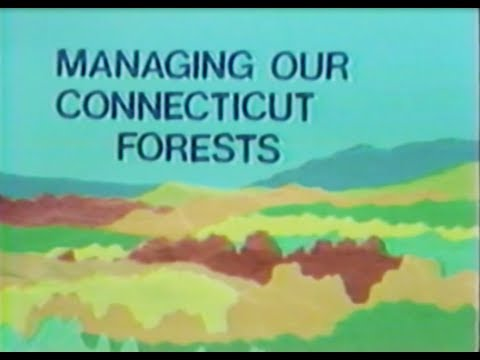 Managing Our Connecticut Forests