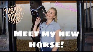 MEET MY NEW HORSE!!