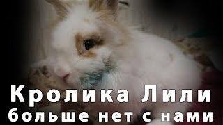 Декоративного кролика Лилии больше нет с нами