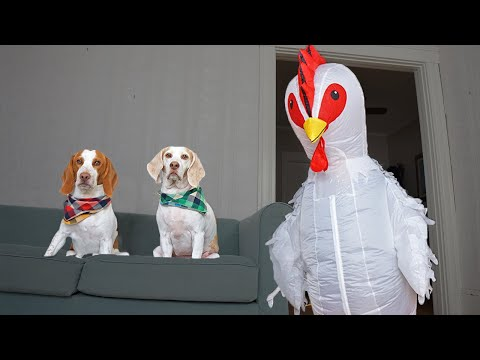 Dog vs Giant Chicken Prank: Funny Dogs Maymo, Potpie & Penny