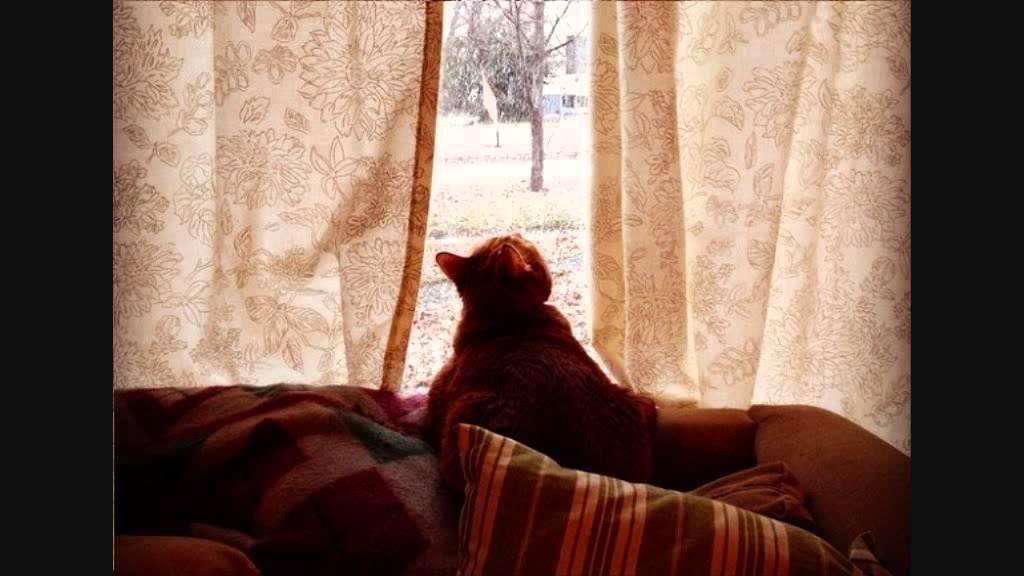 Lucia mannucci il gatto inverno g rodari youtube for Il gatto inverno