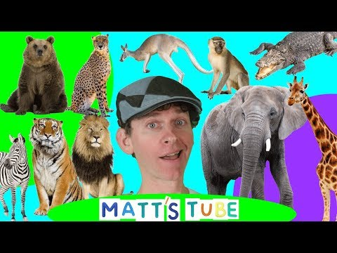 Wild Animals | Matt's Tube #1 | Learning Wild and Zoo Animals for Kids