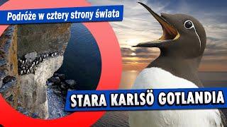 Gotlandia Stora Karlsö i dzikie ptaki na Bałtyku