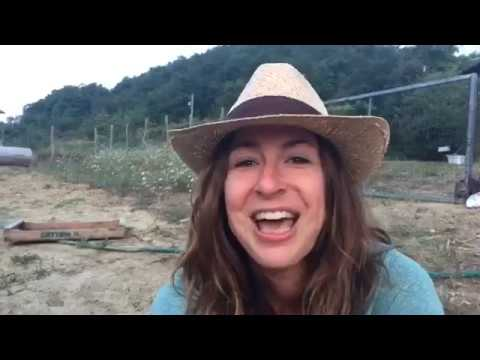 Life in Italy: Walk through our HUGE Garden at Sunrise & Tomato Growing Tips