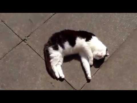 Black and white Tom cat enjoying the sun - YouTube