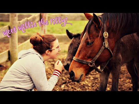 meet-millie-💝-foaling-barn-vlog-//-eastern-equestrian
