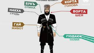 Чеченский язык. Анатомия человека (ishkola)