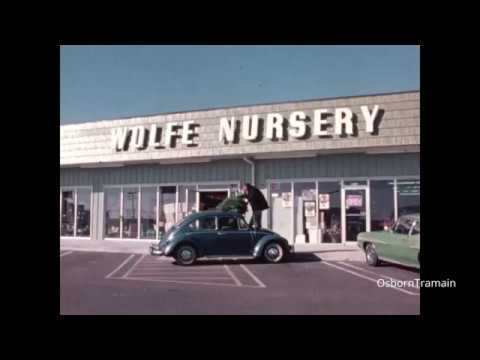 Wolfe Nursury Commercial Christmas Trees Cool Vw Bug Houston Texas