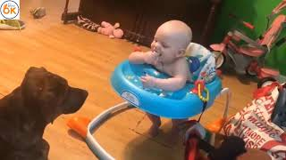 The most interesting baby and dog happening  - Funny Animals - Funny Baby