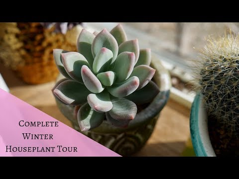 Complete Winter Houseplant Tour | February 2019