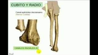 OSTEOLOGIA Miembro superior 4 Diagnostico X