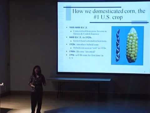 The Surprising Role of Genetically Modified Corn