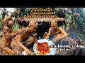 Gimana Rasanya Seharian Jadi Manusia Tanah Keffy Jadi Beruk Tanah  Mp3 - Mp4 Download