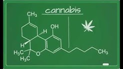 Active ingredients in the cannabis plant