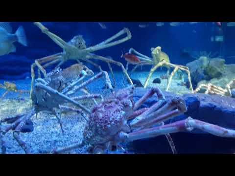 """Choáng với Osaka Aquarium Kaiyukan thủy cung """"khổng lồ"""" nhất nhì thế giới tại Osaka Jpan (phần cuối)"""