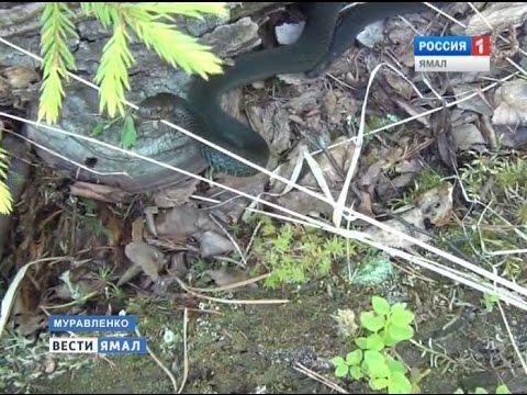Словил в лесу видео фото 746-468
