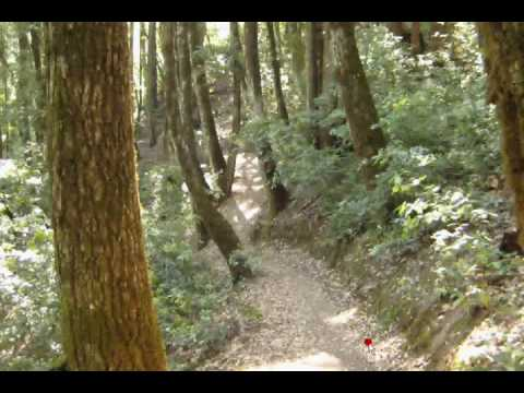 Mountain Bike Basics 101 (New riders)