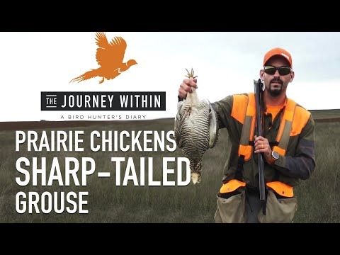 Prairie Chicken And Grouse: The Journey Within - A Bird Hunter's Diary | Mark V Peterson