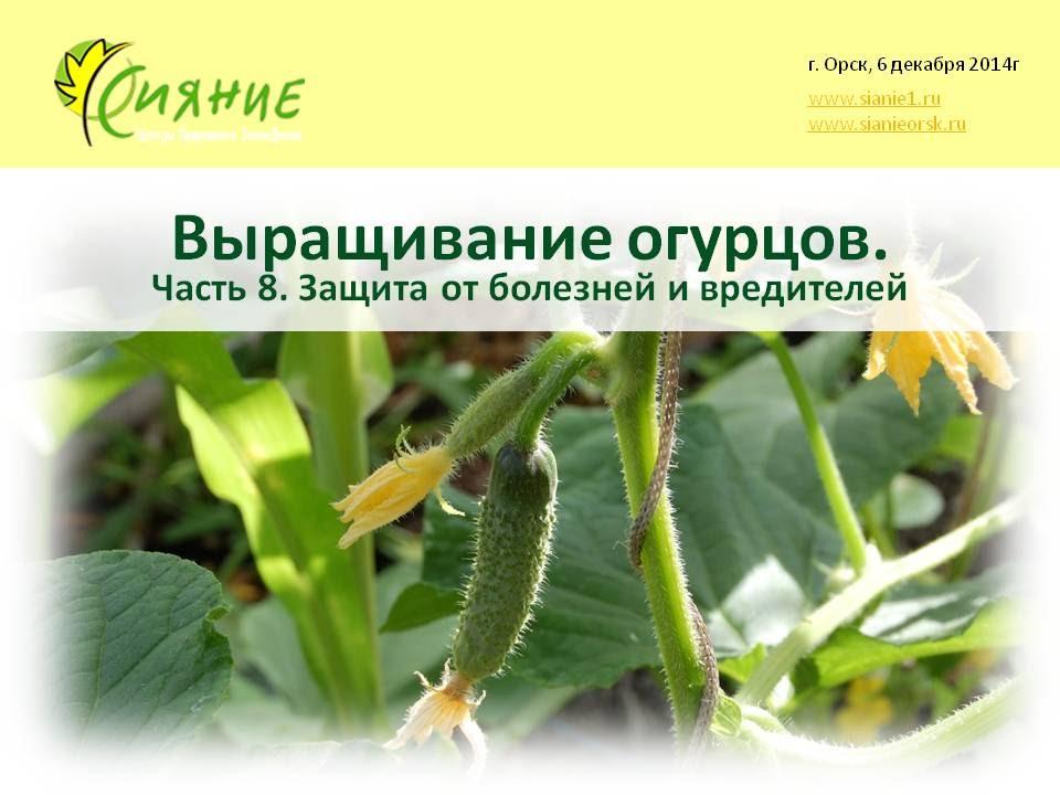 Выращивание огурцов. Ч8  Защита от болезней и вредителей