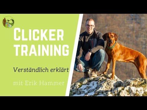Clickertraining für Hunde verständlich erklärt ✔ Mit Anleitung ✔