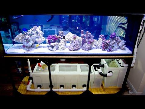 Ryan's 300 Reef
