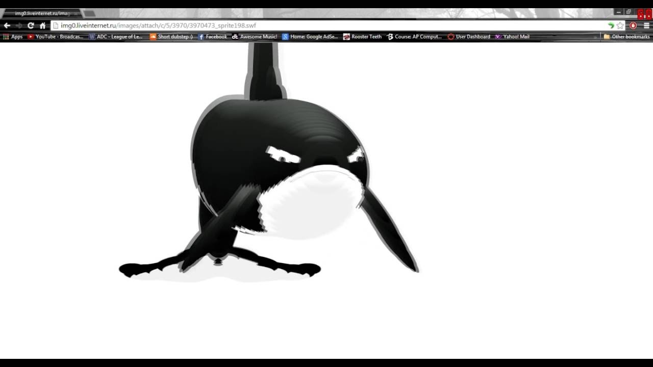 killer whale follows mouse