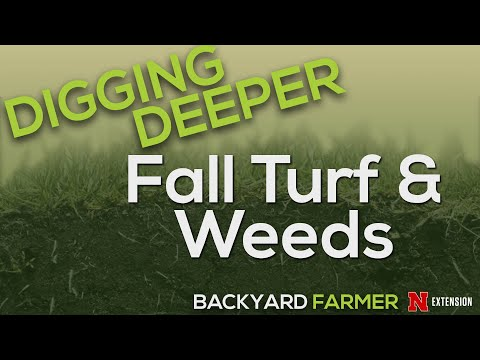 Digging Deeper - Fall Turf and Weeds