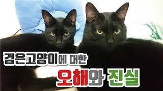 검은고양이에 대한 오해와 진실