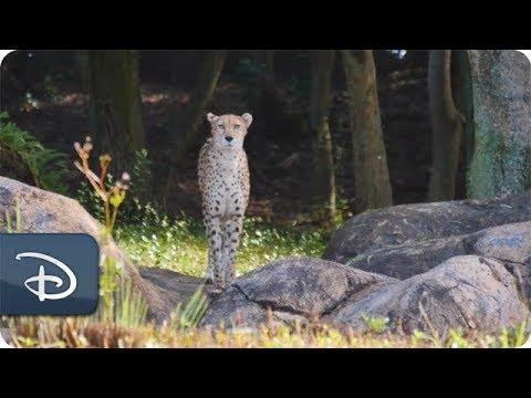 Disney's Animal Kingdom Residents Celebrate #RockTheDots