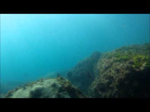 Free diving Stuart FL