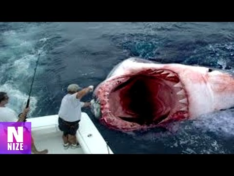 Megalodon Lebt? - Shark Week Exposed