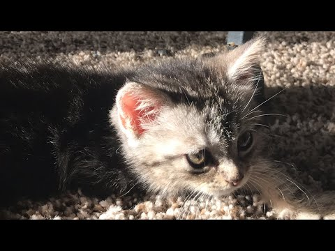 Kittens Abandoned Me!!!