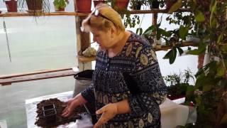 Рассада быстро! Новый способ выращивания огурцы, помидоры, баклажаны, зелень. (часть 2)