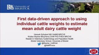Current best estimates of adult dairy cattle weight in the United Kingdom