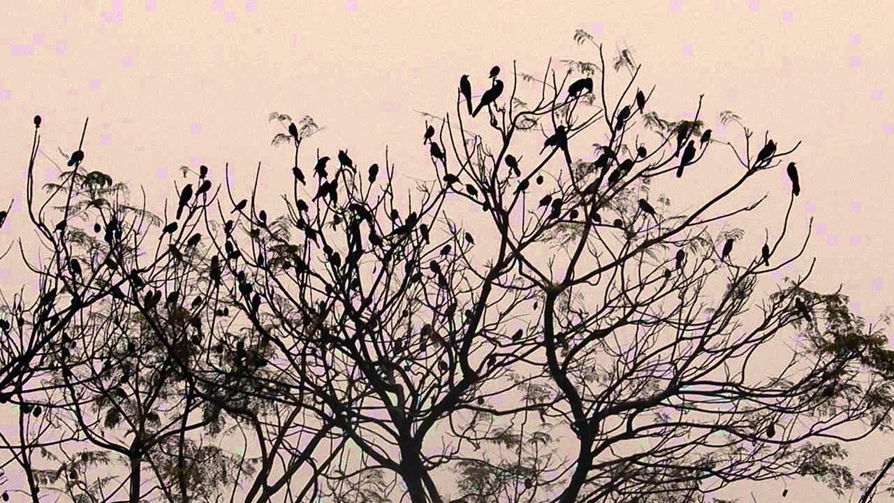 Pájaros Vuelan Entre Los árboles El 1° De Enero De 2013