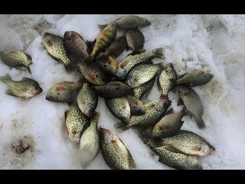Crappie Bluegill And Perch Ice Fishing - 2018 Foxburg Ice Fishing Tournament - Kahle Lake
